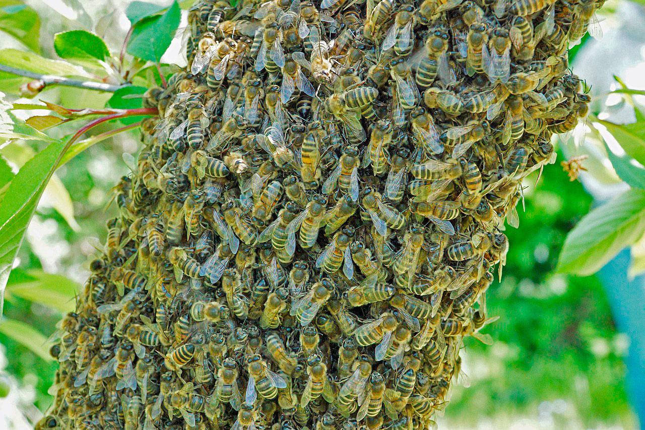 Здоровье пчелиной семьи