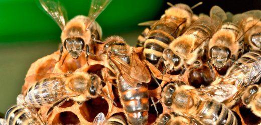 Болезни пчелиной матки