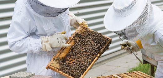 Диагностика болезней пчёл