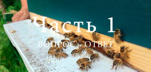 Напад пчел, часть 1
