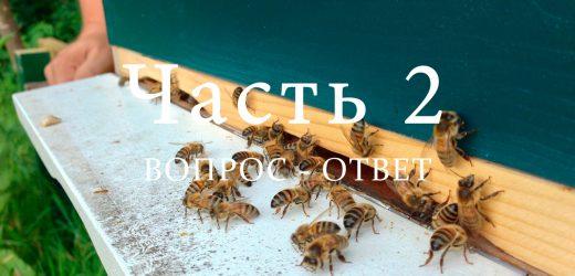 Напад пчел, часть 2