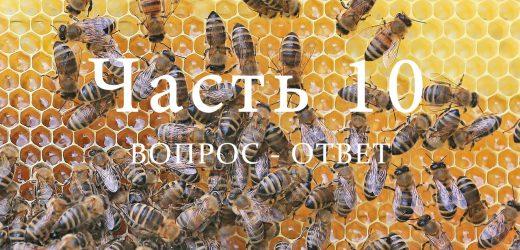 Пчелиная семья, часть 10
