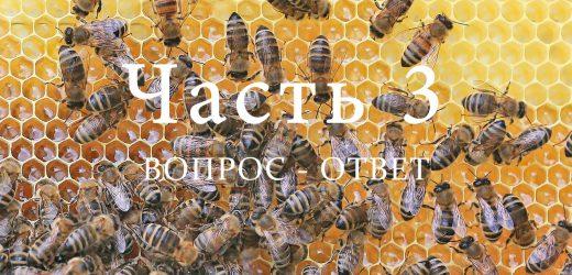 Пчелиная семья, часть 3