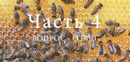 Пчелиная семья, часть 4