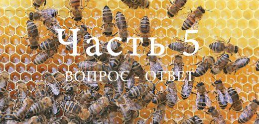Пчелиная семья, часть 5