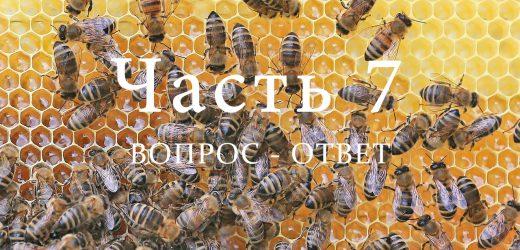 Пчелиная семья, часть 7