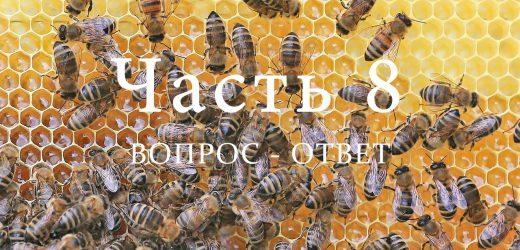Пчелиная семья, часть 8
