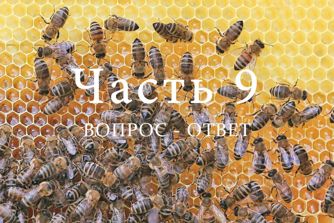 Пчелиная семья, часть 9
