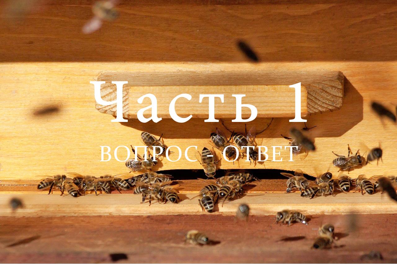 Подготовка пчел к зимовке, часть 1
