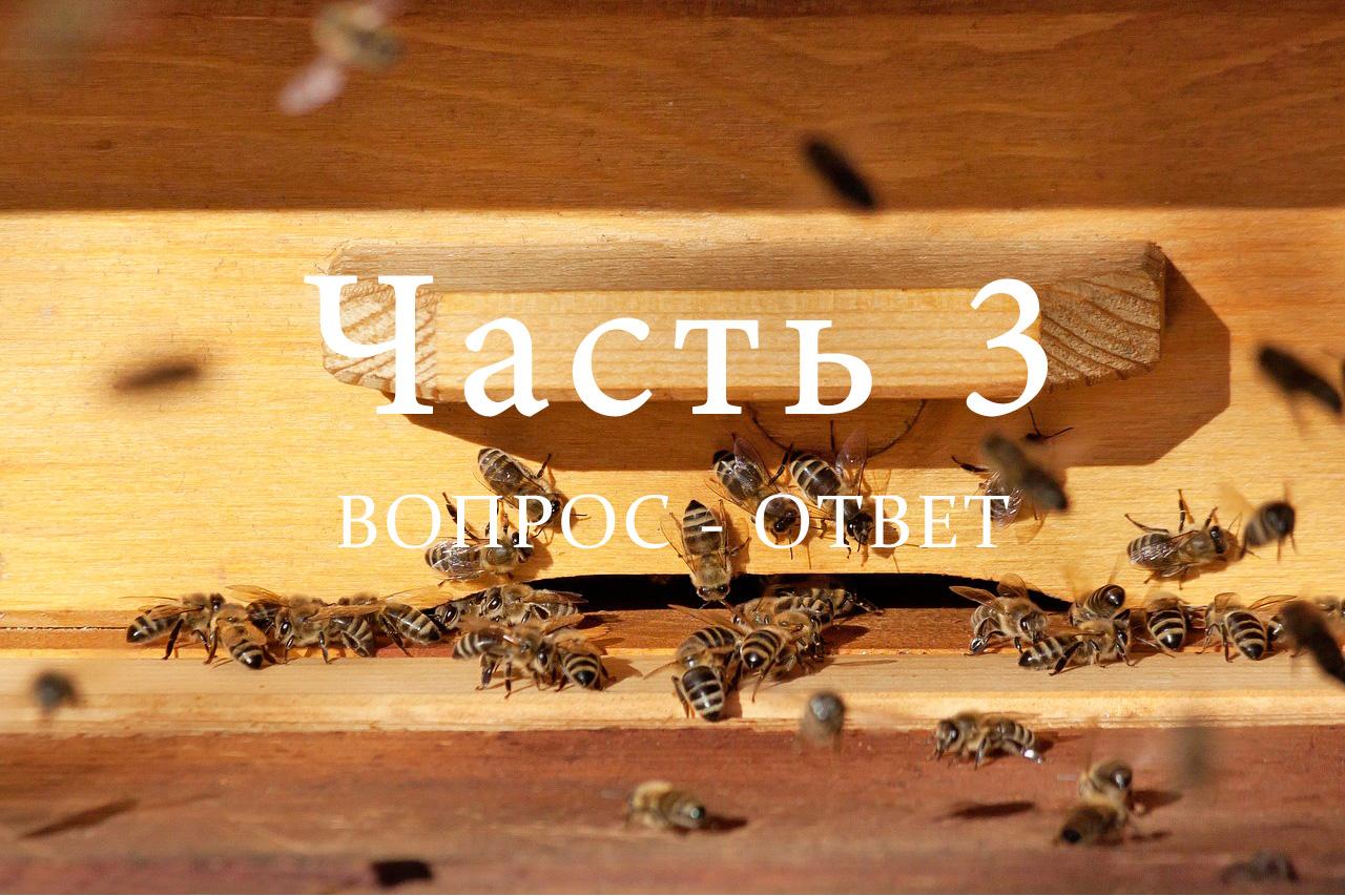 Подготовка пчел к зимовке, часть 3