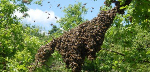 Предотвращаем роение пчел