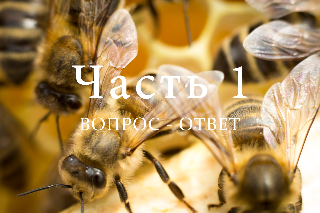 Разведение пчел, часть 1