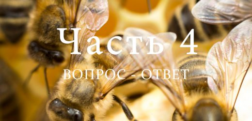 Разведение пчел, часть 4
