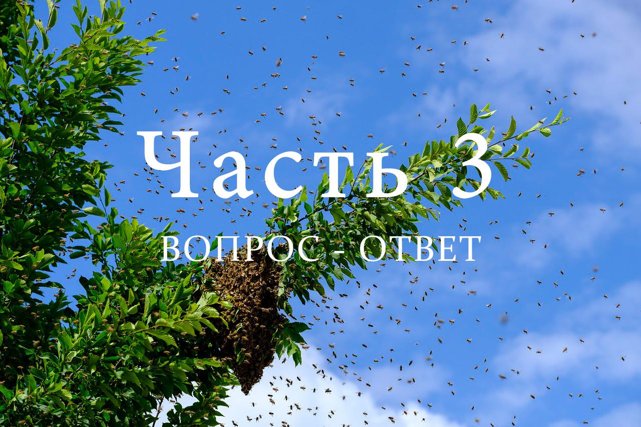 Роение пчел, часть 3