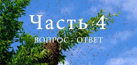 Роение пчел, часть 4