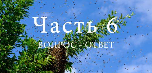 Роение пчел, часть 6
