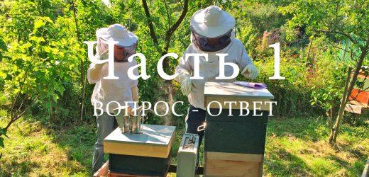 Пчелиный улей, часть 1