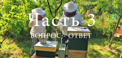 Пчелиный улей, часть 3