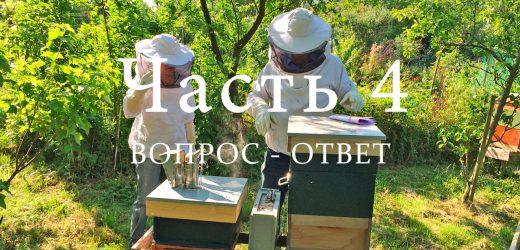 Пчелиный улей, часть 4